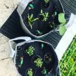 Seedsheets Review 2020: Is It Really Good Gardening Kits?
