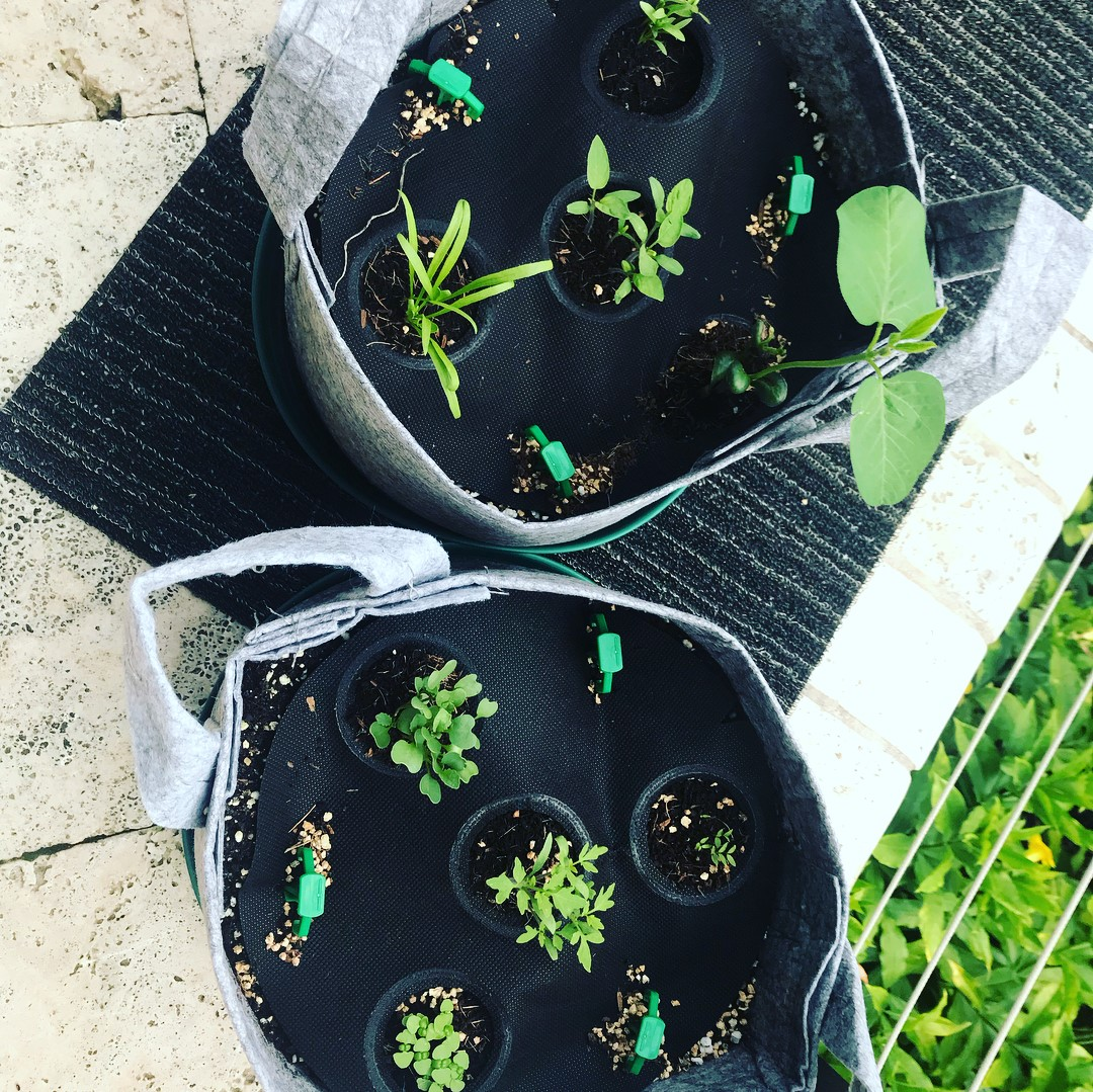 Seedsheets Review 2020: Is It Really Good Gardening Kits? 3