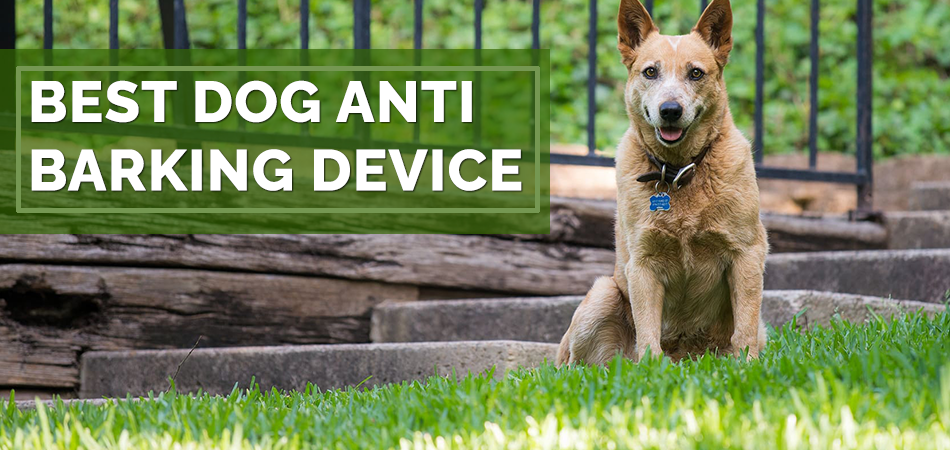 Best Dog Anti Barking Device